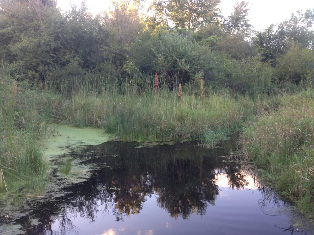 Taylors Bay Inlet - creek and vegitative buffer zone